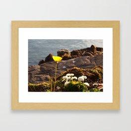 Lakeside Flowers II Framed Art Print