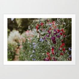 Sweet Pea Garden Art Print