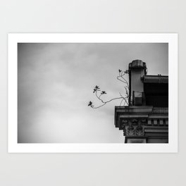 : roots : Art Print