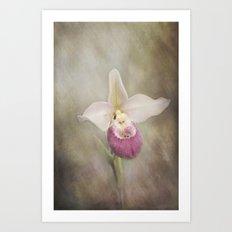 Cinderella's Orchid Art Print
