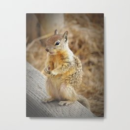Cambria Squirrel Metal Print