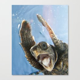 Screaming Turtle Canvas Print