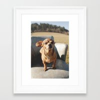 pooh Framed Art Prints featuring pooh by Rae Snyder