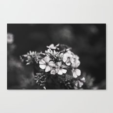 One hundred grey days  Canvas Print