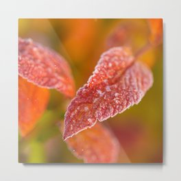 Frosty Red Leaves In The Morning Of October  Metal Print