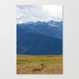 Wild Deer in Olympic National Park Canvas Print