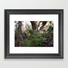 Tree Shrubs Framed Art Print