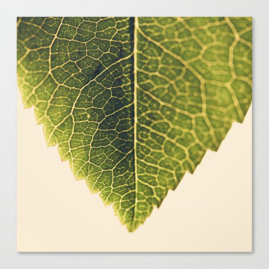green leaf abstract Canvas Print