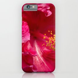 Big Pink Hibiscus Flower The Xandri Collection iPhone Case