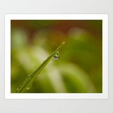 Morning Raindrop Art Print