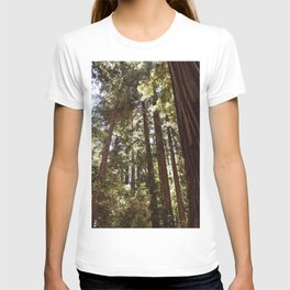 Redwood Forest XII T-shirt
