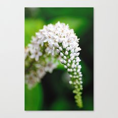 Spring has Bloomed Canvas Print