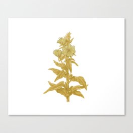 the herbarium yellow Canvas Print