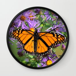 Monarch Butterfly on Wild Asters (square) Wall Clock