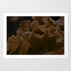 dark ruffles Art Print