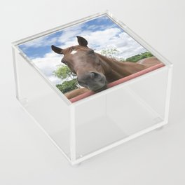Closeup photo of brown horse looking over fence Acrylic Box