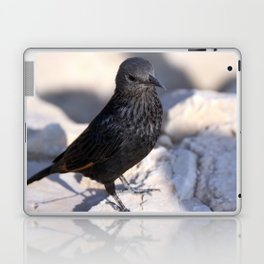 Tristram Starling Masada Laptop & iPad Skin