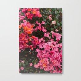 California Blooms IV Metal Print