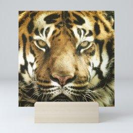 Face of Tiger Mini Art Print