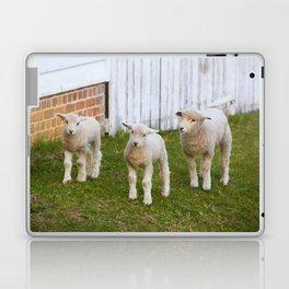 3 Little Lambs Laptop & iPad Skin