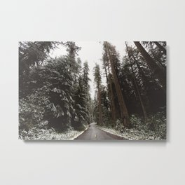 Redwood Forest Adventure II - Nature Photography Metal Print
