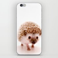 hedgehog iPhone & iPod Skins featuring Hedgehog by Derek Doi