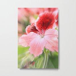 dianthus chinensis Metal Print