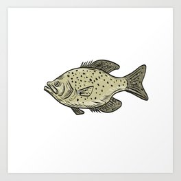 Crappie Fish Side Drawing Art Print