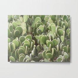 Cactus Wall #2, Opuntia Microdasys Prickly Pear Cactus, aka Bunny Ears, Polka Dot, white red green Metal Print