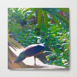 Peacock and Purple Metal Print