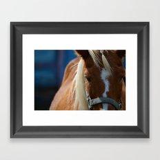 Renaissance Pony - Sorrel Blue Framed Art Print