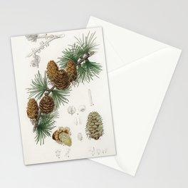 Vintage Botanical Print - 1836 - Larch (Pinus larix) Stationery Cards