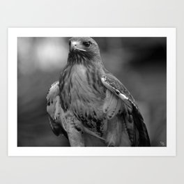 Birds of Black and White Art Print