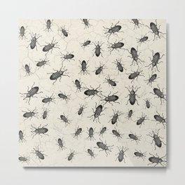 Weevil Beetle chaos Metal Print