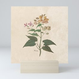 Honesty - botanical Mini Art Print