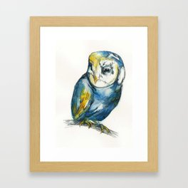 Teal Barn Owl Framed Art Print