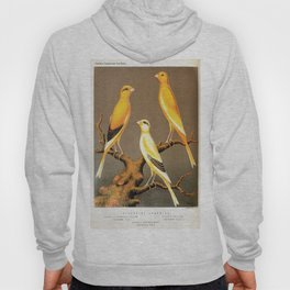 Orange Canaries  Hoody
