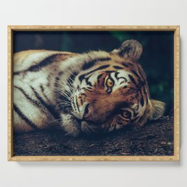 live like a tiger Serving Tray