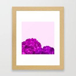 Purple Peonies On A Pink Background #decor #society6 #buyart Framed Art Print