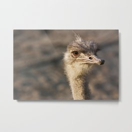 South African Ostrich Metal Print