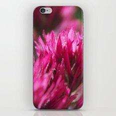 Paintbrush iPhone & iPod Skin