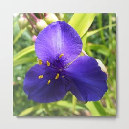 Spiderwort Flower Metal Print