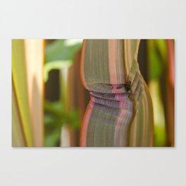 Pleated leaves  Canvas Print