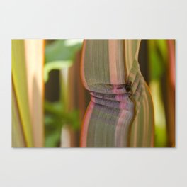 Pleated leaves  Canvas Print