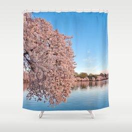 Washington DC Cherry Blossoms Shower Curtain