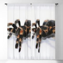 Tarantula Blackout Curtain