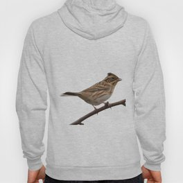 Rustic Bunting Bird Vector Isolated Hoody