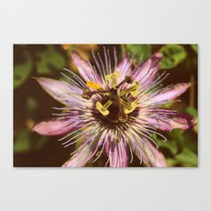 Purple People Eater Canvas Print