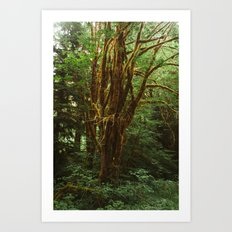 Large Tree with Moss Art Print