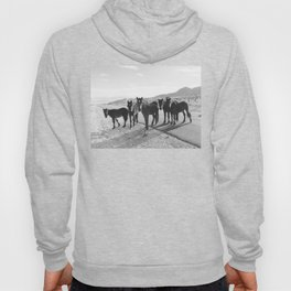 Cold Creek Horse Crew Hoody